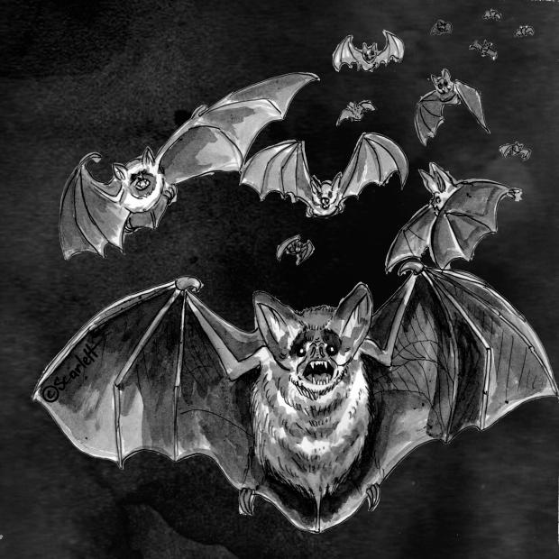 15 - le bal des vampires.jpg